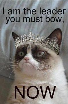 Grumpy Cat meme #GrumpyCat #princessfluffy @Kyrsten Olson Olson Olson Melander @Brynn Shepherd Shepherd Shepherd Ruriani