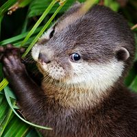 river otter-he would get away with murder,all he would have to do is look at me like that...