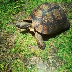 If you are looking for a real authentic South African experience with a great variety of activities, then you have to experience Grootbos Private Nature Reserve. Nature Reserve, Tortoise, South Africa, Cape, In This Moment, Floral, Blog, Travel, Tortoise Turtle