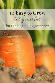 Newbie gardener? No worries! These 10 vegetables are super easy to grow and prolific producers. You'll have a homegrown bounty of food in no time! #vegetablegardening #fruitgarden