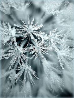 """""""Frosty"""" by Jennifer Potter"""