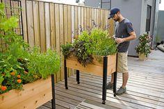 http://www.gardeners.com/buy/standing-garden-elevated-bed-on-legs/8586751.html