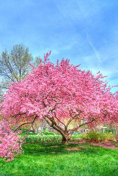 Sherwood Gardens, Baltimore, Maryland