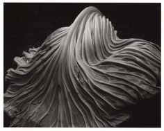 edward weston - Google Search