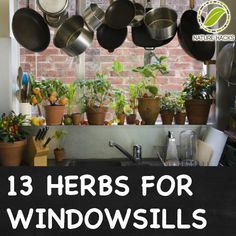 Taking down the curtains in the kitchen and adding glass shelving for these: 13 Easy to Grow Herbs for Winter Windowsill Gardens