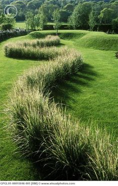 What a sexy line of Variegated Feather Reed Grass--->love how they planted it in a curve