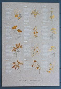 Seasonal Wildflowers Chart by Young America Creative