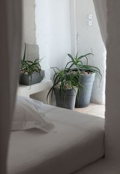1000 images about theo bot slaapkamer planten plants for Oxygen plants for home