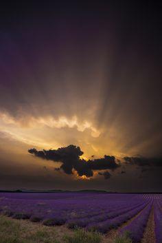 Lavander sunset, beautiful
