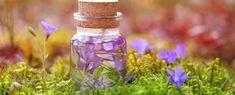 Gyógynövényekből bio- és natúrkozmetikumok Herbs