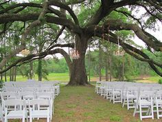 Chandeliers hang from the tree: Love this look for a rustic yet elegant outdoor ceremony | Pine Lake Ranch in Montgomery TX