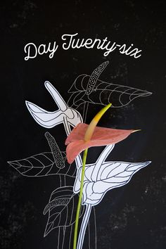 Day 26: How to draw an anthurium - The House That Lars Built