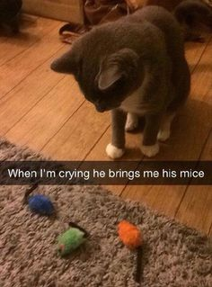 "Funny Animal Pictures Of The Day - 24 Pics | ""Here....dees make you feel better!"" My kitty used to gently wipe away my tears with her paw. I miss her so much....but was lucky enough to have her for 19 years!:"