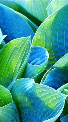 Glitter for Breakfast - Glitter for Breakfast – tinamotta: via carlosenzpondal.t… La meilleure image selon vos envies - Painting Inspiration, Color Inspiration, Palette Verte, Patterns In Nature, Natural Forms, Green Colors, Colours, Blue Green, Aqua Blue