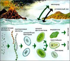 Мы рассмотрим возникновение и формирование жизни на земле с точки зрения теории А.И.Опарина и Джона Холдейна. Эта теория, предложенная  в первой половине ХХ века, основана на предположении о химической эволюции, которая постепенно переходит к биохимической, а затем к биологической эволюции. Образование клетки является очень  сложным явлением. Но оно и положило начало развитию жизни.  Абиогенез - идея о происхождении живого из неживого - исходная гипотеза современной теории происхождения ...