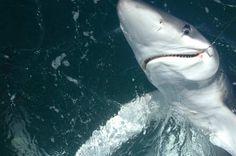 Smile It's Shark Week