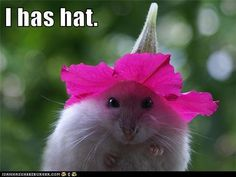 Hamsters are petite and they've got style! After he's done showing off, this hamster can have his hat and eat it too. Cute Baby Animals, Animals And Pets, Funny Animals, Hamster Foto, Hamster Pics, Bear Hamster, Hamster Ideas, Hamster Care, Animal Pictures