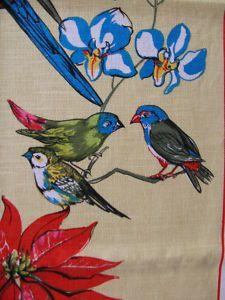 queensland parrots