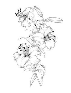 ᐈ Calla lily flower vector stock, arum lily vector Delicate Flower Tattoo, Beautiful Flower Tattoos, Flower Tattoo Arm, Flower Tattoo Shoulder, Flower Tattoo Drawings, Lilly Tattoo Design, Floral Tattoo Design, Flower Tattoo Designs, Tattoo Floral