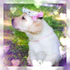 #LUVIT  Happy #InternationalPuppyDay  Even puppies LUV #FlowerCrowns  LUV, Kitty Katrina  #puppy #doglover #petlover #flowercrown #flowerheadband #flowerhalo #floralhalo #festivalfashion #festivallife #bohofashion #bohemianfashion #hippieheadband