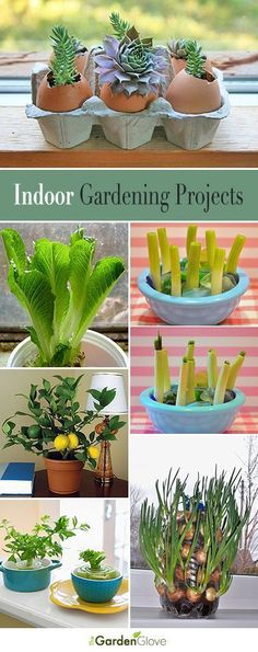 Indoor Gardening Projects • Great Ideas and Tutorials!