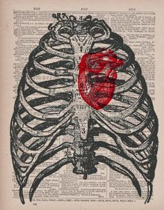 Human heart ribcage vintage dictionary book by papergangsterprints Arte Com Grey's Anatomy, Anatomy Art, Book Page Art, Book Art, Rib Cage Drawing, Human Skeleton Anatomy, La Danse Macabre, Newspaper Art, Art Watercolor