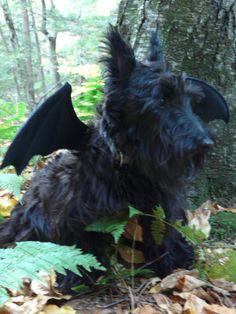 Scottie dressed as Batman