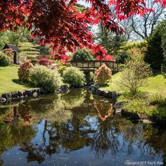 roseysnapper posted a photo:  The Japanese Gardens at Lauriston Castle, near Edinburgh, Scotland were looking particularly attractive today in the warm, spring sunshine.