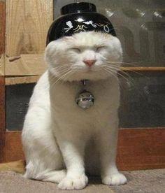 Herro Kitty @Kelly Teske Goldsworthy Teske Goldsworthy Russell