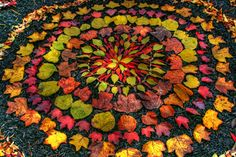 "Autumn Leaf Mandala - ""When finished, collect leaves in a basket, and ceremoniously release into moving water or back into nature. This reminds us of the sweet impermanence of life and the joy of letting go."" ~ Chelsea Woolf"