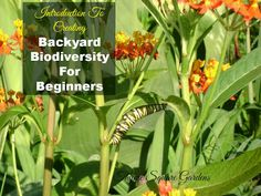 TSG: Backyard Biodiversity for Beginners Part 1 - Introduction