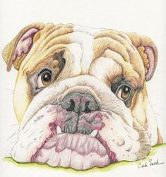 english bulldog  bouledogue anglais Chien 20x25  Print Art affiche  aquarelle