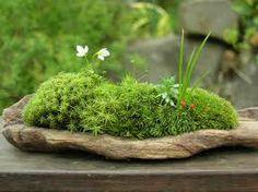 Composition végétale décorative