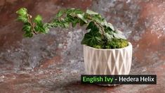 Make Stunning Mason Jar Solar Lights - Plant Growth, Plant Care, Coffee Grounds Garden, Pachira Aquatica, Knockout Roses, Chlorophytum, Powdery Mildew, Borscht, Inside Plants