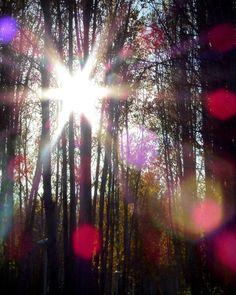 گاه برای رسیدن به نور باید از تاریکی ها عبور کرد.  عکس سال93پارک سرارود  #نور#درخت#زیبایی#خورشید #روشنی#پارک_سرارود#اصفهان#مبارکه_اصفهان by famaleki_70