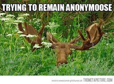 Hiding in Canada… hey, look, it's Dakota!!! ;)