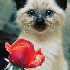 Feliz dia dos namorados  Follow: @odonocuida . . #cat #catsofinstagram #cats #catstagram #instacat #catlover #catoftheday #ilovemycat #catlovers #catsagram #lovecats #instagramcats #cats_of_instagram #instacats #cutecat #catlife #ilovecats #catofinstagram #gato #gatos #cutecats #catsofinsta  #petstagram #instapets #cutepets #portugal #happyvalentinesday