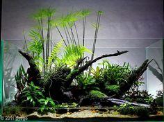 #Aquarium #Fresh water #Fish #Plants #Follow #수족관  #민물 #물고기 #식물 #따라 #akvarium #färskvatten #fisk #Växter #Följ #พิพิธภัณฑ์สัตว์น้ำ #น้ำจืด #ปลา #พืช #ปฏิบัติตาม #水族馆 #淡水 #鱼 #植物 #跟随