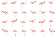 Flamingoes by Gillian Didham Illustration