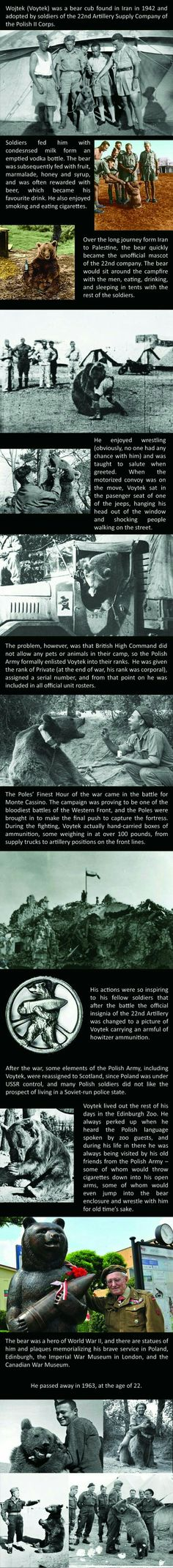 The other incredible Allied bear (besides Russia). Amazing.