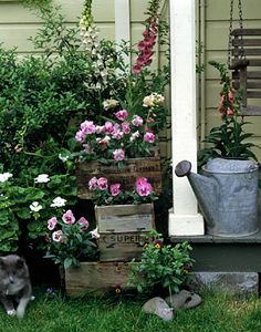 Containers can be more than clay  pots: Old wooden crates and watering  cans work well, too.