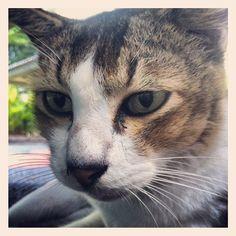 Cat portrait!