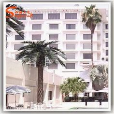 https://www.alibaba.com/product-detail/Factory-production-date-palm-high-12ft_60250884534.html?spm=a2747.manage.0.0.IEtK4C