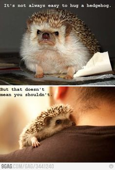Funny pictures about Hug A Hedgehog Today. Oh, and cool pics about Hug A Hedgehog Today. Also, Hug A Hedgehog Today photos. Funny Cute, The Funny, Funny Pics, Videos Funny, Cute Baby Animals, Funny Animals, Animal Jokes, Cute Hedgehog, Hedgehog Animal