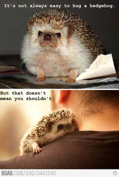 Love the Hedgehog