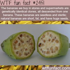 I Wonder if They Taste like Bananas 😃 ~ WTF Facts : funny, interesting & weird facts----My life is a lie - Do you really think so