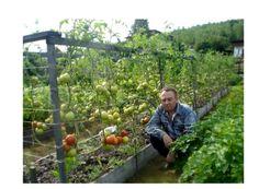 севооборот и совместимость огородных культур таблица: 3 тыс изображений найдено в Яндекс.Картинках
