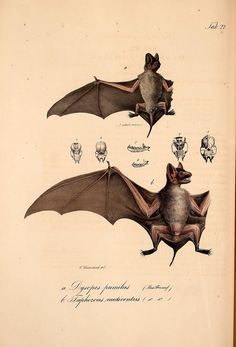 n141_w1150 by BioDivLibrary, via Flickr