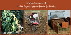 3 mistakes to avoid when preparing garden for winter so your vegetable garden and tomato plants are healthy next year. Don't over-cultivate . but yes, use mulch and compost. Growing Tomatoes From Seed, Growing Tomato Plants, Varieties Of Tomatoes, Growing Tomatoes In Containers, Grow Tomatoes, Tomato Garden, Vegetable Garden, Natural Ecosystem, Winter Vegetables