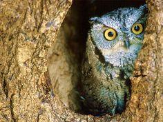 I like owls